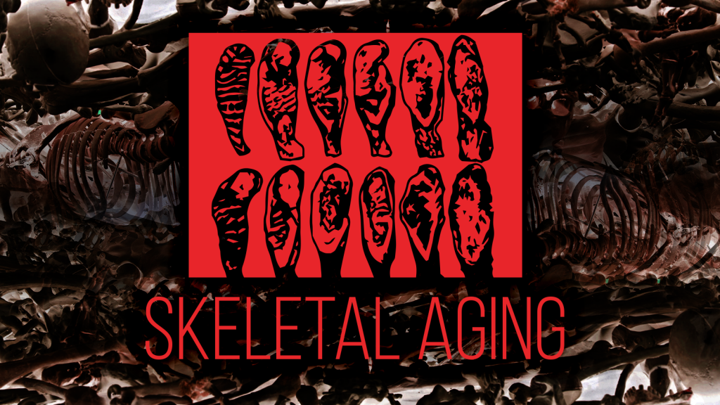 What happens to the skeletal system during aging: is biological age really inscribed in bones and teeth?